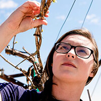 Leah Groves examines grapevines